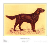 Hunting Dogs  Setter