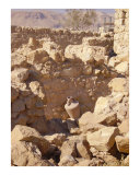 Amphora in Masada ruins  Dead Sea area  Israel