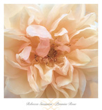 Promise Rose