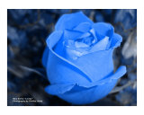 Blue Lovely