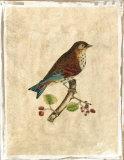 Selby Birds III