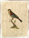 Selby Birds IV