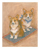 Corgis
