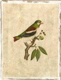 Selby Birds V