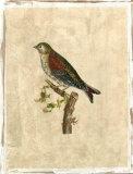 Selby Birds VI
