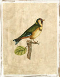 Selby Birds I