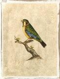 Selby Birds II
