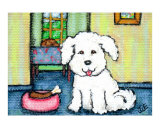 Bichon Frise Dog's Thanksgiving Dinner