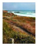 Path to Ocean Shoreline
