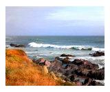 Sunny Ocean Shoreline