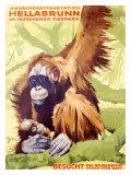 Munich Zoo, Ape Giclée