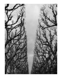 Trees seen as a sculpture 2