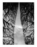 Trees seen as a sculpture 1