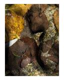 Hommage to Rodin's Eternelle Idole - Variation Sea Bottom 1