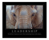 Leadership - African Elephant