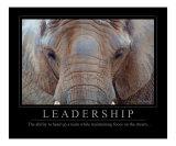 Leadership - African Elephant