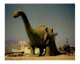 Tyrannosaurus Rex - Cabazon  CA