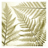 Ferns III