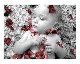 Petals (4 of 4)