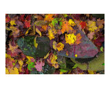 Autumn Leaves   Pink Field Stone