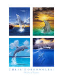 Wonders of Creation - Dolphins