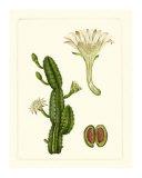 Exotic Flora V