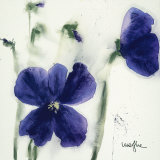 Pansies III