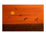 Red Sky Birds