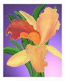 Bantham Orchid