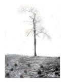 A High Tree