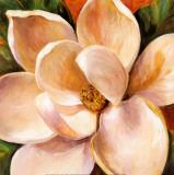 Magnolia Glow II