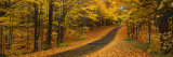 Autumn Road  Emery Park  New York State  USA