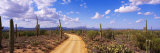 Road  Saguaro National Park  Arizona  USA