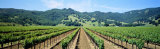 Napa Valley Vineyards Hopland  CA