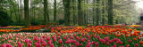Keukenhof Garden  Lisse  the Netherlands