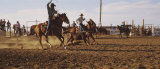 Cowboys Roping a Calf  North Dakota  USA