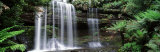 Rainforest  Mt Field National Park  Tasmania  Australia