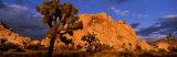 Sunset  Joshua Tree National Park  California  USA