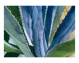 Agave 2