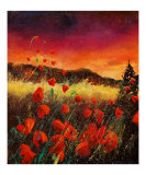 red poppies 56