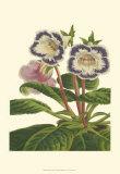 Gloxinia Garden I