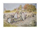 Digging Potatoes  1905