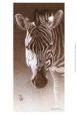 Grant  the Zebra
