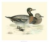 Morris Ducks III