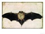 Bat  1522