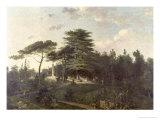 The Cedar of Lebanon in the Jardin des Plantes