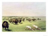 Hunting Buffalo Camouflaged with Wolf Skins  circa 1832