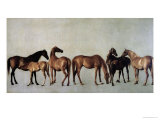 Mares and Foals Without a Background  circa 1762