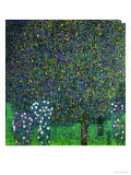 Roses Under the Trees, circa 1905 Reproduction d'art par Gustav Klimt