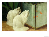 White Cats Watching Goldfish